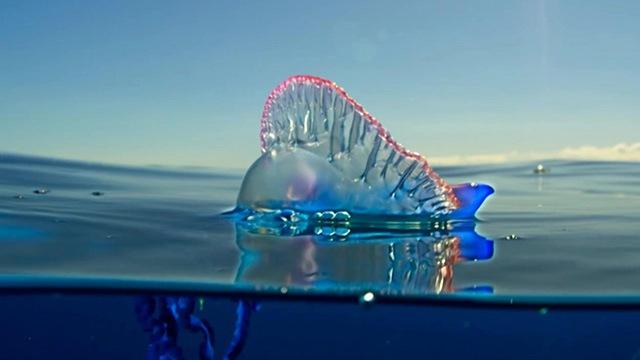 BBC纪录片《蓝色星球2》高清无水印纯英文字幕MP4下载
